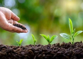 Tres consejos para reducir la huella ecológica de tu empresa peru (1)