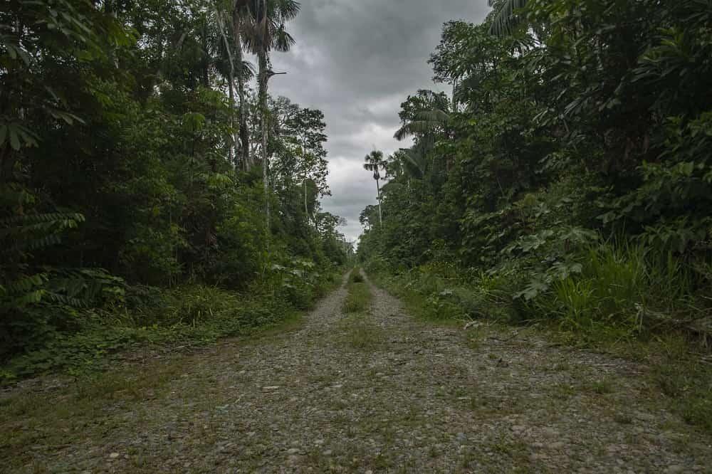 Vista-panorámica-de-la-carretera-voces-en-la-carretera-reserva-de-la-biosfera-del-manu.jpg-min